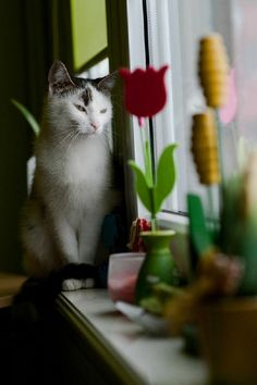 Nasze Koty