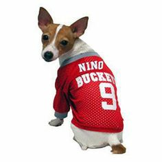 Show off your pet's sporty side with these college football jerseys! $21.95