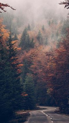 Landscape Background, Landscape Wallpaper, Autumn Wallpaper Tumblr, Forest Wallpaper, Autumn Phone Wallpaper, Mobile Wallpaper, Fall Pictures, Nature Pictures, Fall Images