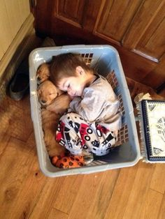 Little guy fell asleep in a basket with his golden retriever puppies Baby Animals Pictures, Cute Animal Pictures, Dog Pictures, Funny Animals, Cute Animals, Kids Animals, Animal Pics, Animal Memes, Animal Jam