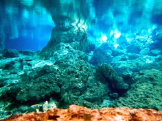 Underwater view from the Underground River System of the Cenotes Dos Ojos.   #tourguidekay #tourguide #privatetour #playadelcarmen #cancun #tulum #coba #chichenitza #cenotes #snorkeling #turtles #ruins #rivieramaya #yucatan #mayanruins #rivieramayaweddings #mexico #traveltips  https://www.kay.tours