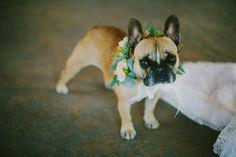 intimate vineyard wedding, french bulldog, floral garland, getting ready