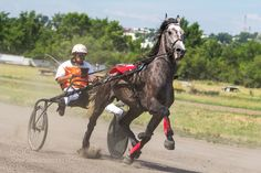 Harness racing in Siberia by dmzkrsk