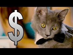 What if cat charged for their services? This video tells all: http://www.sparklecat.com/weird-cat-videos/sunday-catinee-for-services-rendered