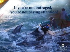 #Taiji, Japan ---- #dolphins #thecove