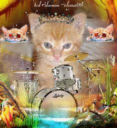 petit cats roux qui joue de la batterie