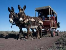 donkey cart with roof Biblical Allusions, Beaufort West, Mountain Zebra, Pull Wagon, Local Museums, Victorian Buildings, Kings Park, Sheep Farm, Back Road