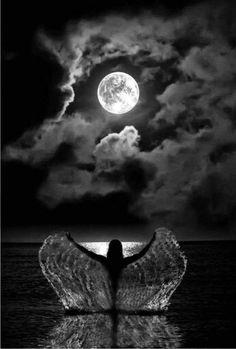 Emerging under moonlight