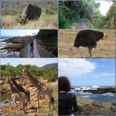 Verdwaald op safari?? Lees de blog en kijk de vlog op www.ADDEllen.nl