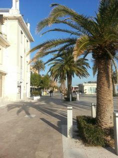 Visit Grottammare - Seafront with palms
