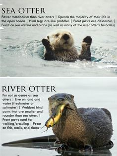 otters good to know