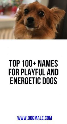Top Names for Playful and Energetic Dogs Top 100 Names, Dog List, Dog Names, The 100, Play, Funny, Dogs, Doggies, Ha Ha