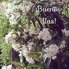 ¡A por el martes!  #ideassoneventos #blog #bloglovin #organizacióndeventos #comunicación #protocolo #imagenpersonal #bienestarybelleza #decoración #inspiración #bodas #buenosdías #goodmorning #tuesday #martes #happy #happyday #felizdía #flores #flowers #blanco #white