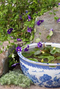 Tiny water garden pot container in blue and white Oriental style Wedgewood color theme pattern bowl, with Clematis vine x jackmanii in purple flowers against rock boulder stones Container Pond, Container Water Gardens, Container Gardening, Pond Design, Garden Design, Small Water Gardens, Pinterest Garden, Clematis Vine, Pot Jardin