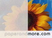 Cream / Ivory Vellum Paper 40# - Paperandmore.com