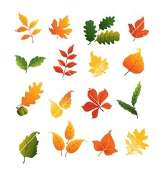 Colourful autumnal leaves set vector - by Seamartini on VectorStock®