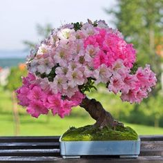Stunning #bonsai tree …