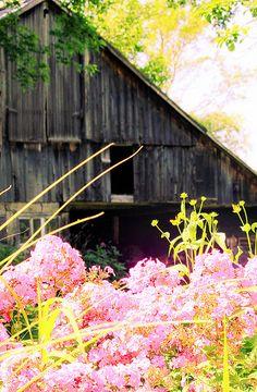Primavera rural