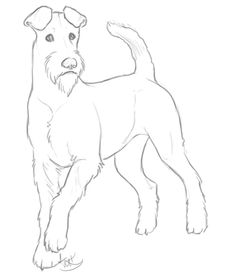 Image from http://orig07.deviantart.net/a8d7/f/2013/095/c/a/sketch_practice___irish_terrier_by_tuketi-d60kekc.png.