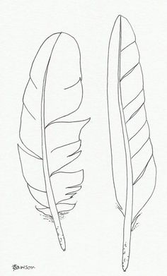 Originele inkt veer tekening 2 zee vogel veren to drawing birds Original ink feather drawing ~ 2 sea bird feathers Feather Drawing, Feather Painting, Feather Art, Bird Feathers, Paper Feathers, Feather Stencil, Tattoo Feather, Bird Stencil, Tribal Feather