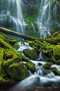 Proxy Falls, Willamette National Forest, Oregon, USA   I believe I have been there. and walked across that log