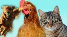 dog V/S catFinger Family Nursery english 3d  rhymes    Children Animated...