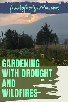 Wildfires and drought can't stop gardeners! Especially when Family Food Garden has tips and suggestions to tackle these problems. Gardening in these conditions is all about resistant landscaping and picking tolerant plants that fit into the environment. See what this post suggests for you should do. #drought #landfires #gardeninganddrought #gardeningandwildfires Container Gardening, Gardening Tips, Healthy Fruits And Vegetables, Garden Planning, Compost, Climate Change, Family Meals, Landscaping, Environment
