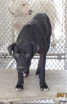 Deadline: Tues, April 18th 2017 @3:30pm   Mack #48876 (brother to Marcus) male blk/wht approx. 10-12 mos old 31 lbs pen A20 Sebring, Florida https://www.facebook.com/136510243142818/photos/a.1060240907436409.1073741878.136510243142818/1162127073914458/?type=3&theater