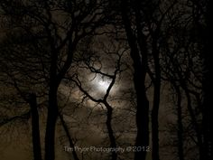 "Tim Pryor - This atmospheric moonlit woodland has been a popular image and depicts woodland oaks along the North Devon estuary at Instow. The image is available as a 20"" x 15"" Limited Edition Canvas (1/250). The surface is laminated for ultimate protection! £80.00"