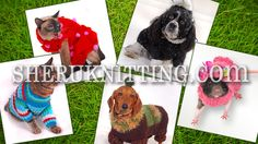 CROCHET AND KNIT PET CLOTHES http://sheruknitting.com/sherufashion/collections/item/722-crochet-and-knit-pet-clothes.html The latest fashion craze and trends are not only concentrate on humans but also on pets. Dressing pets has became a nice tradition especially if the outfit for a dog or a cat was made by its owner. In this video you will find some pretty ideas of crochet and knitted sweaters, coats, hoodies, dresses, hats for dogs/cat.