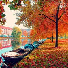 Colors of nature at #Amsterdam #Netherlands, via @topupyourtrip