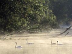 Morning on the St Joseph River Schweitzer Bridge Rd  Three Rivers Mi Photo by Alice Dobrowolski