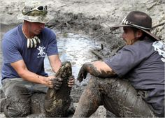 Gator Boys : Photo Gallery Animal Planet: Animal Planet