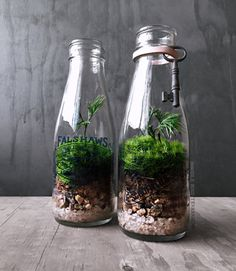 """Antique glass milk jar (style varies) filled with layered stones and fresh live moss. • Included is 1 glass milk bottle terrarium with plants (antique key optional) • Easy care; no sun/fertilizer required and water once a week. • Dimensions are approx. 8"""" high by 3"""" wide. • Comes with a free mini spray bottle for easy watering, and care sheet. • Ships via USPS Priority 2-3 day mail with tracking included. • No assembly required."""