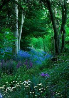 woodland glen