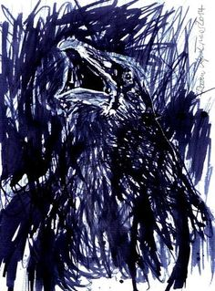Raven – Rabe 2014