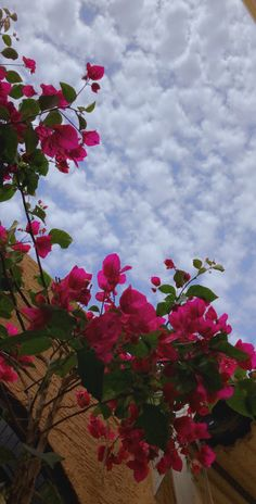 Wallpaper Nature Flowers, Flower Iphone Wallpaper, Flower Background Wallpaper, Beautiful Flowers Wallpapers, Beautiful Nature Wallpaper, Scenery Wallpaper, Flower Backgrounds, Pretty Wallpapers, Flowers Nature