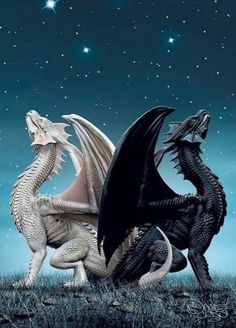 Black and white dragons. Beautiful pic.
