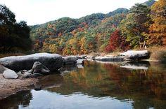 Korea's autumn colors..
