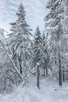 Snow in Nordmarka Forest - Oslo, Norway
