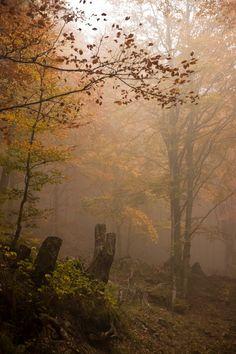 Trees Atmosfera d'autunno