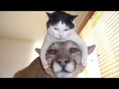 Image result for funny animal pictures