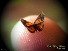 The tiny tiny world according to Julia Cissell- of GodsFlyingFlowers and her remarkable tiny butterflies. When skimming the world of PC on facebook I found myself looking in amazement at the beaut...