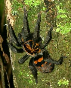 Cool Insects, Bugs And Insects, Beautiful Bugs, Animals Beautiful, Eight Legged Freaks, Itsy Bitsy Spider, Jumping Spider, Snakes, Insects
