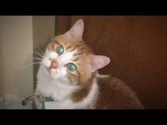 あーにゃん、猫のお見送りに行く!ちょっと切ないです♥♥猫との会話を楽しむ動画 Conversation with a talking cat - YouTube