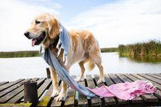 Auch Hunde lieben unsere Hamamtücher Manolya aus Bio-Baumwolle. Durch die Fischgrät-Webart sind die aber auch soooo weich und anschmiegsam, das man sie super als Schal tragen kann. Super, Dogs, Animals, Weaving, Doggies, Cotton, Animaux, Animal, Animales