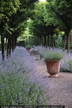 beautiful vase in a garden sounnded by a lane of lavender.