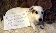 12 People Who Didn't Realize How Smart Their Dogs Were Until Now