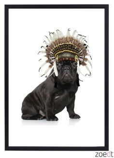 Een grappige poster voor kinderkamer van een franse bulldog met een indianentooi op, van Zoedt.