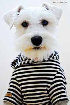after a long day at work, sometimes, you just need to look at puppies in clothes.